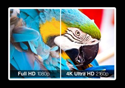 Verschil Full HD vs 4K Ultra HD televisie - papagaai